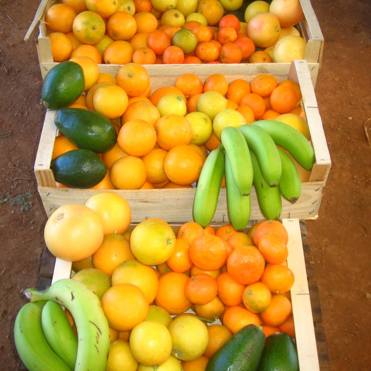 panier-de-fruit-agrumes