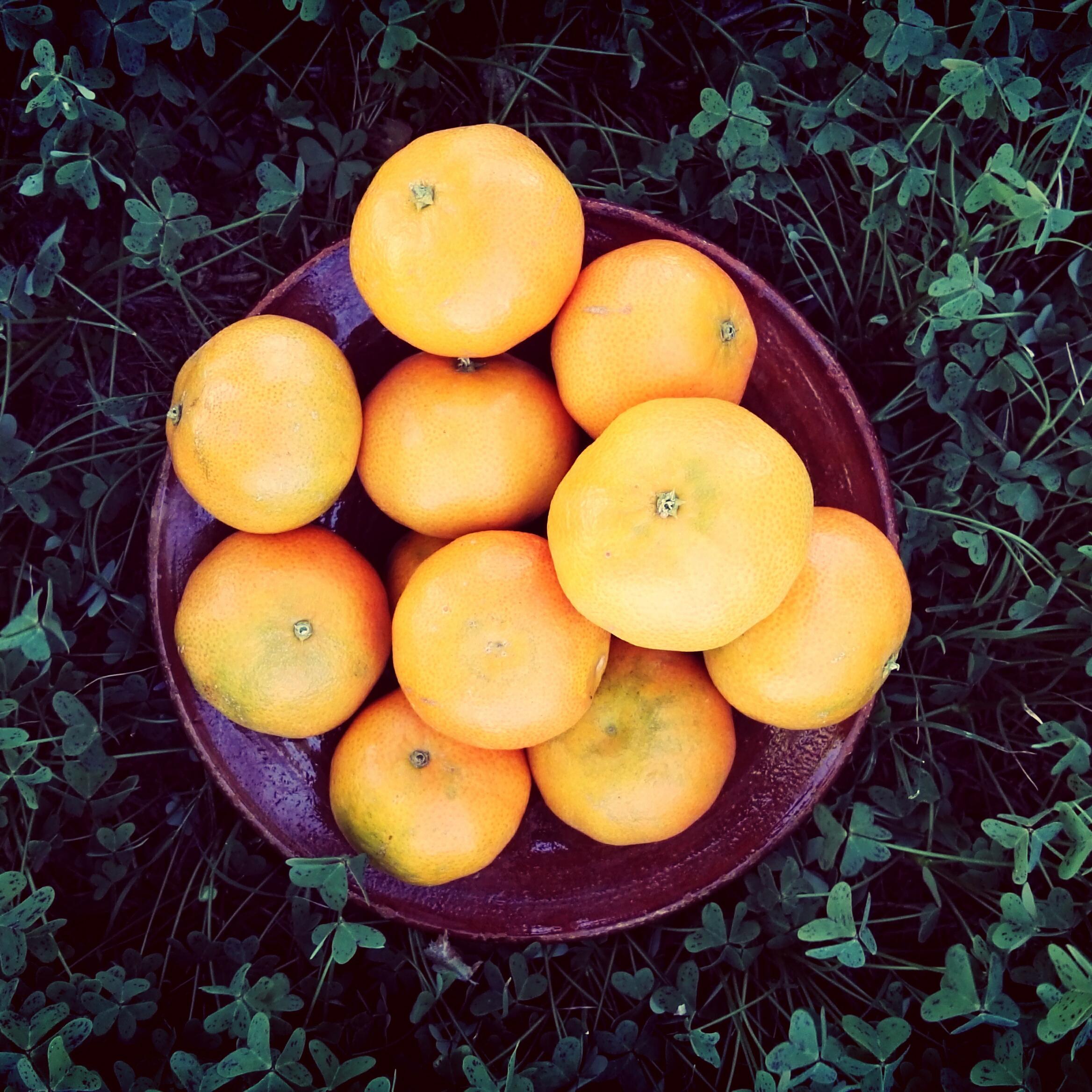 mandarine-390e-kg-valence
