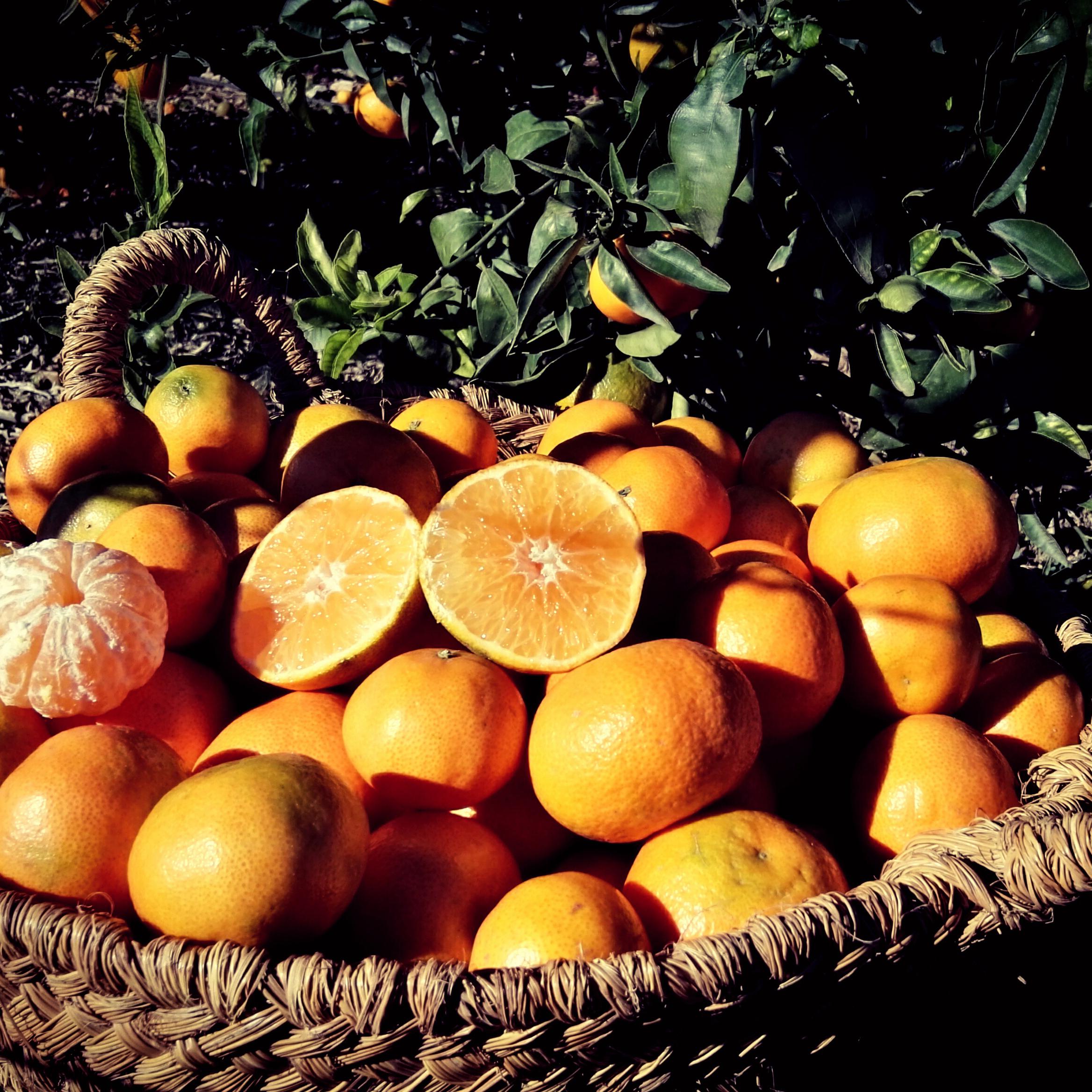 mandarine-390e-kg-valence2