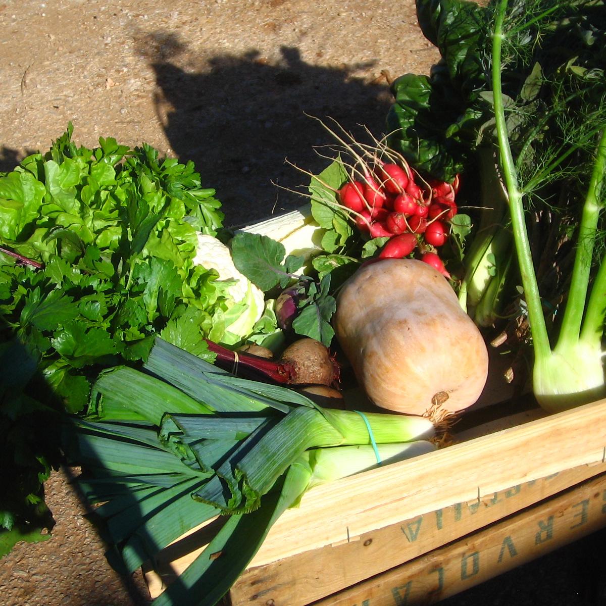 pnaier-legumes3